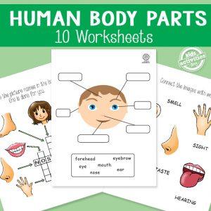 Human Body Parts Workbook