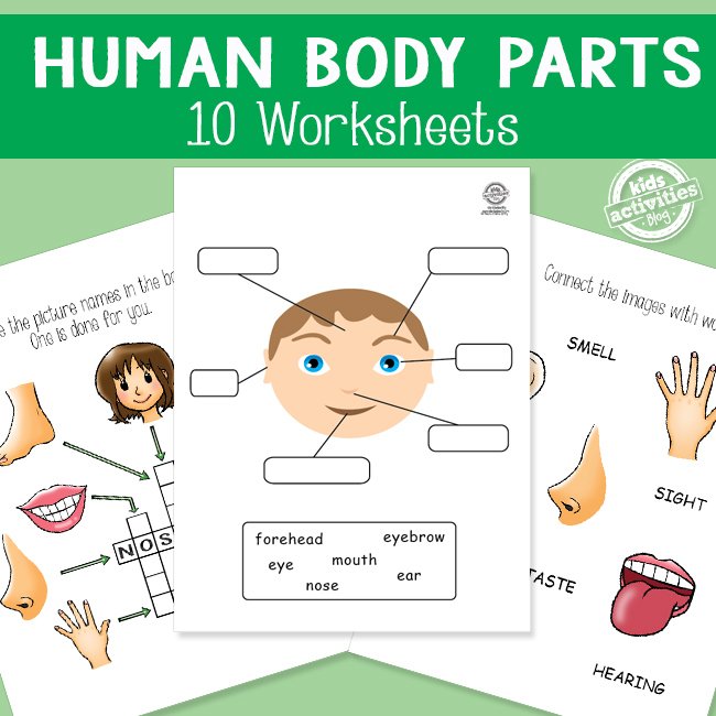 Human Body Parts Worksheets for Kids Health Lessons – Body Parts Worksheets